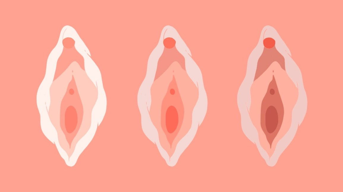 a pink background with three slightly different, stylized vulvas in a flat graphic/vector style